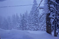 Vintage Photo Slide 1970 Winter Snow Wonderland Scene Cozy Trees