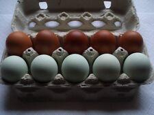 10 Eier, (keine Bruteier), reinr. franz. MARANS- und GRÜNLEGER !!