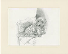 SEALYHAM TERRIER SAT IN CHAIR 1930'S DOG SKETCH PRINT by KF BARKER READY MOUNTED