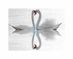 Swans Love Black White Romance Swan Photo Art Picture Canvas Print