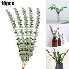 10Pcs/Bouquet Dried Natural Eucalyptus Branches Leaves New Decors Flower D5J1