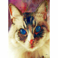 """ACEO Art Card Siamese Cat Print (2.5"""" x 3.5"""") Cobalt Blues - Signed by Artist"""