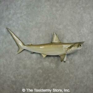 """#17341 WC   65"""" Hammerhead Shark Reproduction Taxidermy Mount For Sale"""