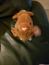 "Ty Beanie Baby ""Paul� The Walrus. 1999 Mint Condition"