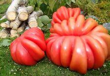 Russian Ruffled Tomato - MUSHROOM BASKET (Gribnoe Lukoshko) - 20 Heirloom Seeds
