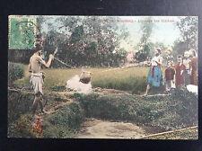 CP carte postale Indochine Tonkin Haïphong arrosage rizières