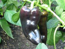Sweet Hungarian Black Ungarische schwarze Paprika süß & saftig