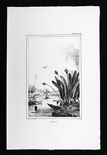 Debret Brazil Print - Eliconia Heliconia Flower Botanical - Cayman Cranes Marsh