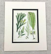 1857 Seaweed Print Antique 19th Century Hand Coloured Ocean Sea Plants Green