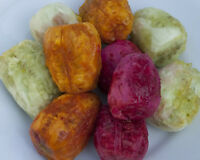 120+ FRESH MIX Prickly pear / Opuntia Ficus Indica seeds All 3 Varieties