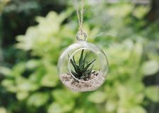 Plantpak vetro Globe Terrario-Fiore, pianta, impiccagione, vaso, CANDELA