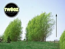 "Austree Hybrid Willow Salix Rooted and Ready One big 24"" 2 ft Fresh cutting grow"