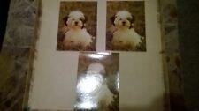Shih Tzu-Welpe-DDR Hunde AKs-300394/85-BB6 9327-ungelaufen-3 AK in einer Auktion