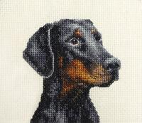 DOBERMAN, Black & Tan ~ Dog, Full counted cross stitch kit *Fido Studio