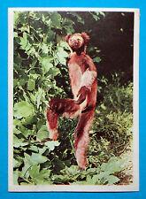 Figurina Panini-ANIMALI DI TUTTO IL MONDO 1965-n.50-INDRI-rec