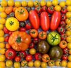Tomato Seed Catalog List