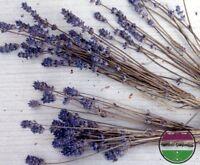 USA HEIRLOOM Organic Munstead Lavender  50-400 seeds