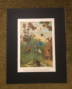 1885 BUTTERFLIES WASPS & SPIDER Lovely Mounted Colour Print BEAUTIES FROM NATURE