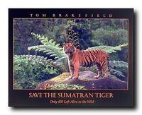 Sumatran Roaring Tiger Wildlife Endangered Species Animal Wall Art Print (16x20)