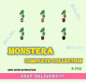 Monstera Complete Collection 5 Variations 6 Pcs FASTEST!!!