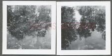 Unusual Vintage Photos Trees in Water Reflection  705366