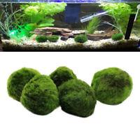 2 Stück Moss Ball Mini Wasseraufbereitung Grünalgen Marimo Ball für Aquarium