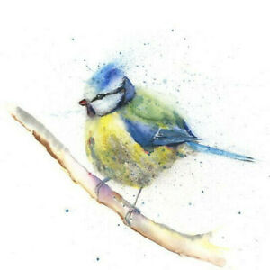 Limited Print of BLUE TIT original watercolour by HELEN APRIL ROSE   317