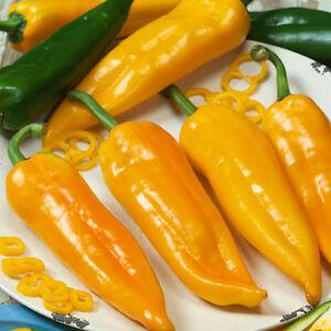 Pepper 400 Long Yellow Ringo Seeds - UK Seller
