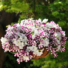 100 Pcs Wave Petunia Flower Seeds Mixed Annual High Quality Professional Pack