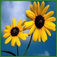 30 Custom Sunflowers Personalized Address Labels