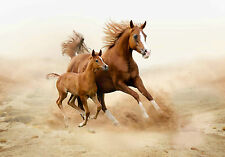 STUNNING WILD HORSES CANVAS #21 QUALITY HORSES CANVAS PICTURE WALL ART A1