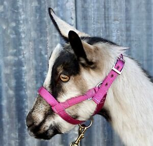 Goat Halter Made in USA by Halter-All LARGE 20 colors Sheep Livestock Figure 8