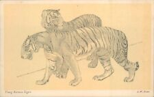 Postcard Young Burmese Tigers The Zoo Series By A.W Peters Unposted