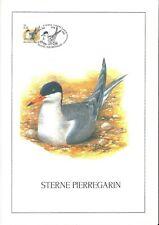 FDC 3011 - Oiseau Buzin sur gravure format A4 !