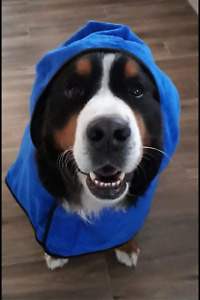 CLEARANCE Plain Blue Dog towel/Dog robe, drying coat, hooded paw print design