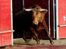 "Bullfighting Movie"" THE MAGNIFICENT MATADOR "" ENGLISH,  DVD"