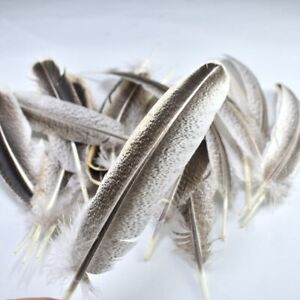 10-100pcs high quality natural rare feathers 10-12 inches/25-30 cm DIY craft