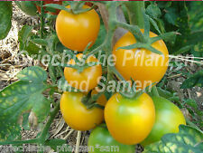 Earlina *** sehr frühe Tomaten-Sorte  gelbe Tomate 10 frische Samen Balkon Kübel