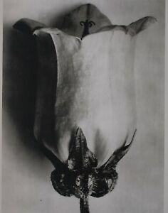 1942 ORIGINAL PRINT PHOTO GRAVURE plate 53 KARL BLOSSFELDT ABSTRACT BOTANICAL