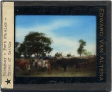 PHOTO ON GLASS BY EDWARD VAN ALTENA TYPES OF CATTLE
