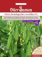 Dürr Mini-Snackgurke Lunchbox F1 Balkon /Kübelgeeignet Gurke Salat Gurken