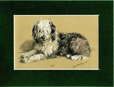 Lucy Dawson ~ Old English Sheepdog ~ Colour Print Genuine Vintage 1946