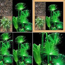 100 Pcs Rare Emerald Fluorescent Flower Seeds Night Light Emitting Decor Plants