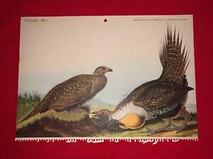 Antique Advertising JJ Audubon Bird Calendar Print Cock of the Plains