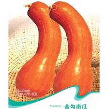 FD2489 Golden Hook Pumpkin Seed vegetable Seed Hot ~1 Pack 8 Seeds~