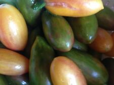 20 graines de TOMATES ARTISAN BLUSH, LUCKY TIGER, GREEN TIGER EN MELANGE BIO