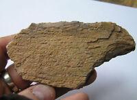LARGE Piece Of Fossil Turtle Bone- Kem Kem - Morocco - Cretaceous - 7cm