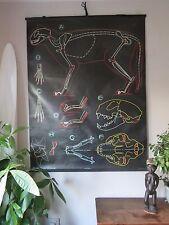 VINTAGE DR auzoux sougy Pull Down SCUOLA muro gesso grafico di un gatto zoologico