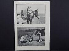 The Breeder's Gazette Nov 28 1906 Photographic Print #07 Horse, Vacation Time