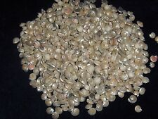 1/2 POUND OF PEARL UMBONIUM SEA SHELLS BEACH DECOR NAUTICAL CRAFT TROPICAL